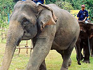 ジャンボツアー(象乗り、蘭園、少数民族の村)